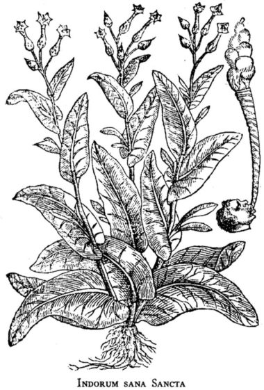 Tobacco as Medicine « Country House Essays
